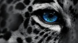 4K Big Blue Eyes Wallpaper