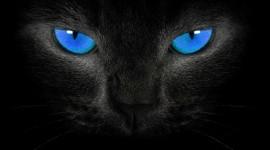 4K Big Blue Eyes Wallpaper For PC