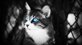 4K Big Blue Eyes Wallpaper Free
