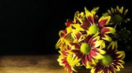 4K Chrysanthemum Image