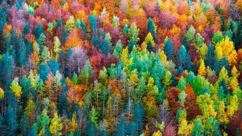 4K Colorful Autumn wallpapers high quality