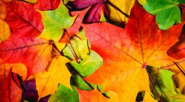 4K Colorful Autumn Wallpaper 1080p