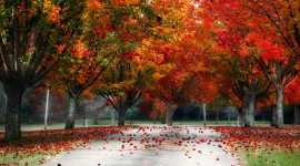 4K Colorful Autumn Wallpaper