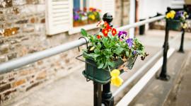 4K Street Flowers Image Download