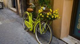 4K Street Flowers Photo