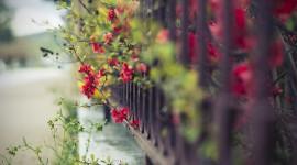 4K Street Flowers Photo Download
