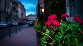 4K Street Flowers Wallpaper 1080p