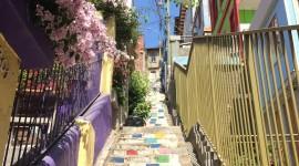 4K Street Flowers Wallpaper For Mobile#1