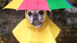 Animal With Umbrella For Android#1
