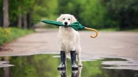 Animal With Umbrella For Desktop