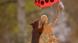 Animal With Umbrella For Mobile