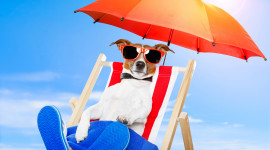 Animal With Umbrella Image Download