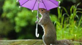 Animal With Umbrella Photo