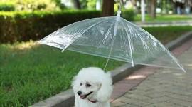 Animal With Umbrella Photo#1