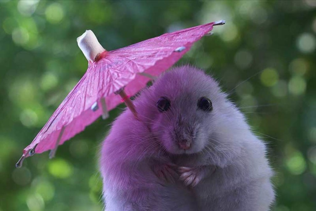 Animal With Umbrella wallpapers HD