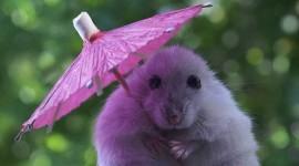 Animal With Umbrella Wallpaper