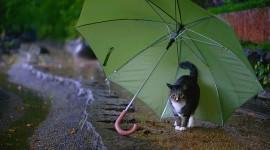 Animal With Umbrella Wallpaper Full HD