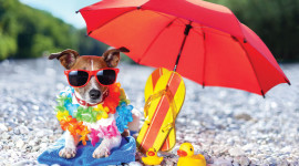 Animal With Umbrella Wallpaper Gallery
