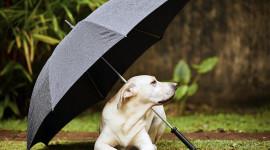 Animal With Umbrella Wallpaper HQ