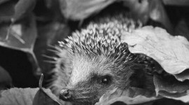Autumn Hedgehog Wallpaper For IPhone