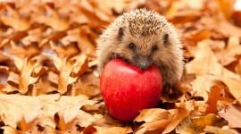Autumn Hedgehog Wallpaper Free