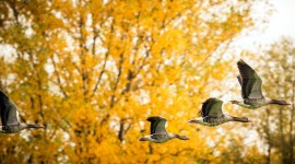 Birds In The Fall Wallpaper Background