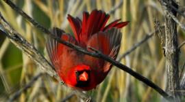 Birds In The Fall Wallpaper Full HD