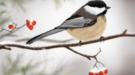 Birds In The Fall Wallpaper Gallery