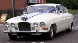 Car Bow Photo