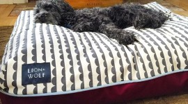Dog Bed High Quality Wallpaper