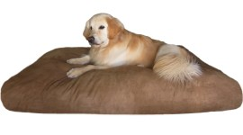 Dog Bed Wallpaper Download Free