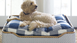 Dog Bed Wallpaper For IPhone