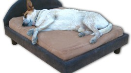 Dog Bed Wallpaper For PC