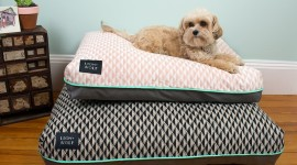 Dog Bed Wallpaper Full HD