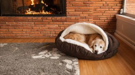 Dog Bed Wallpaper HQ