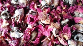 Dried Rose Wallpaper Gallery