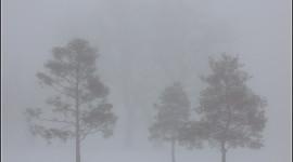 Fog In The City Wallpaper Full HD