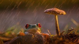 Frog In The Rain Aircraft Picture