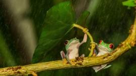 Frog In The Rain Desktop Wallpaper