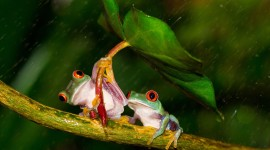 Frog In The Rain Image Download