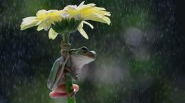 Frog In The Rain Photo