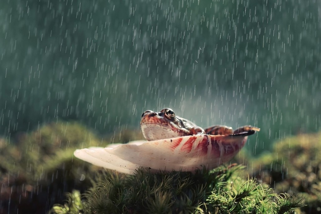 Frog In The Rain wallpapers HD