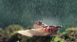 Frog In The Rain Wallpaper