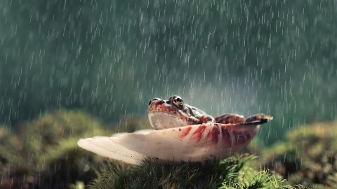 Frog In The Rain wallpapers high quality