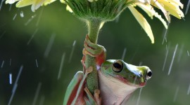 Frog In The Rain Wallpaper For Android
