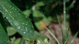 Frog In The Rain Wallpaper For IPhone