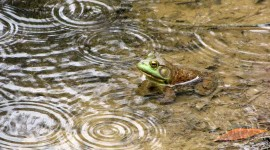 Frog In The Rain Wallpaper For PC