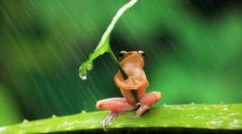 Frog In The Rain Wallpaper Full HD