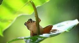 Frog In The Rain Wallpaper Gallery