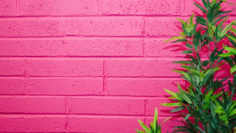 Fuchsia Color wallpapers high quality